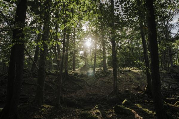 Strömby naturreservat