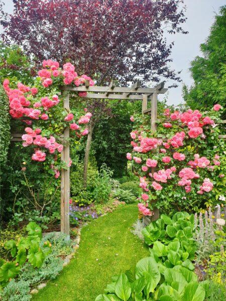 Jessica Peterssons Trädgård